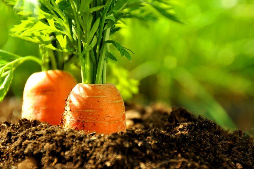 carrot GDPR compliance